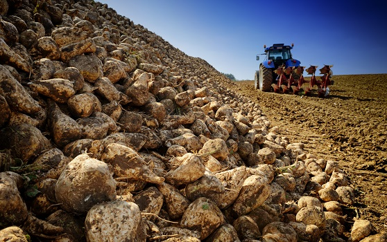 What Role Do Flow Meters Play in Processing Sugar Beets