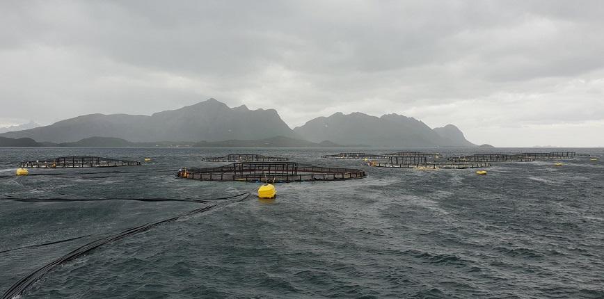 Aeration in fish farming